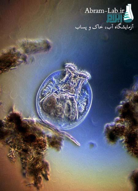باکتریهای آلوده کننده آب