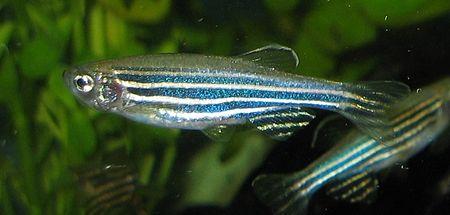 آب استخر پرورش ماهی